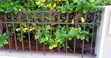 גדר מתכת לגינה פרטית